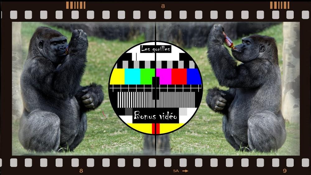 La bouteille et le gorille. (Bonus Vidéo)