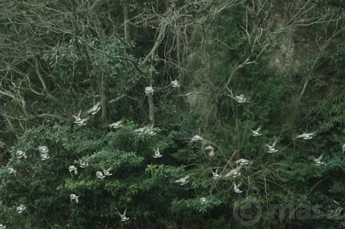 Rassemblement d'oiseaux 鳥の動き