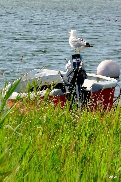 R03 - Dans la barque