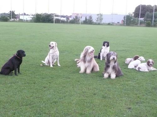 chien-groupe.jpg