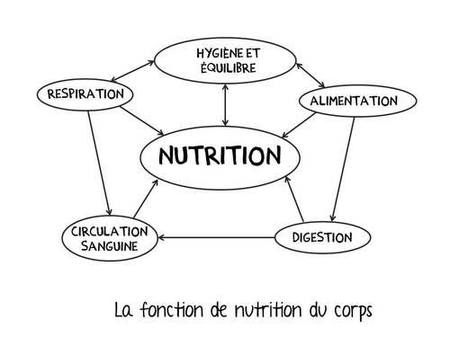 Affichage fonctions de nutrition