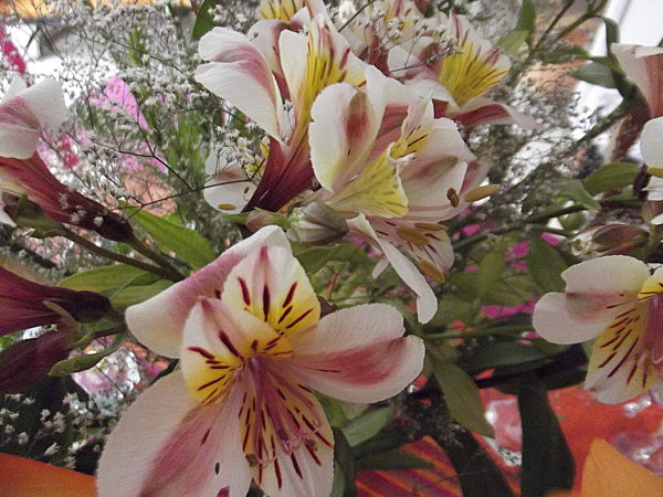 fleurs retour 005