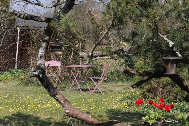 "Les tapis ""pure nature"" au jardin"