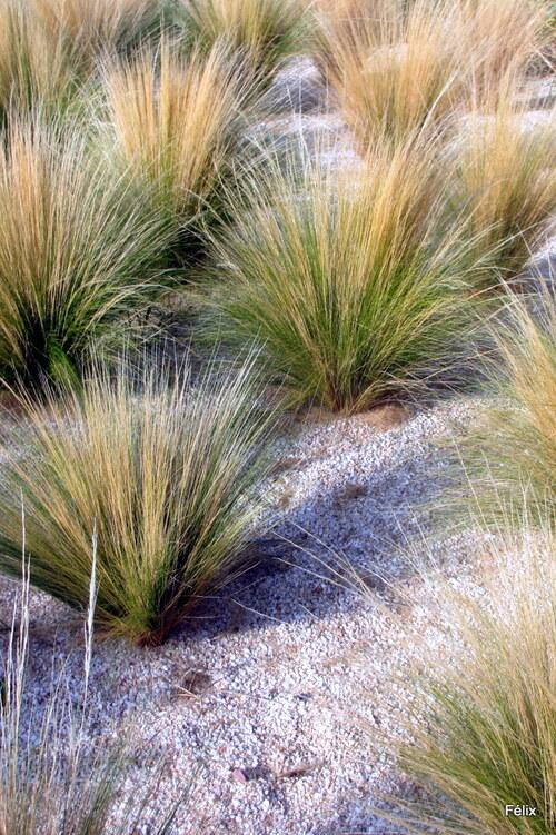 Des herbes décoratives