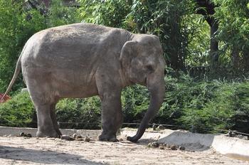 dierenpark emmen d90 221
