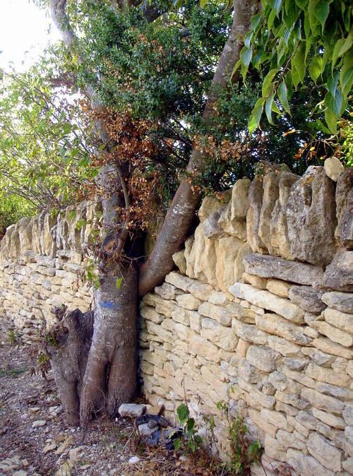 Le mur et l'arbre