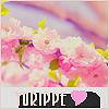 Yurippe ♥
