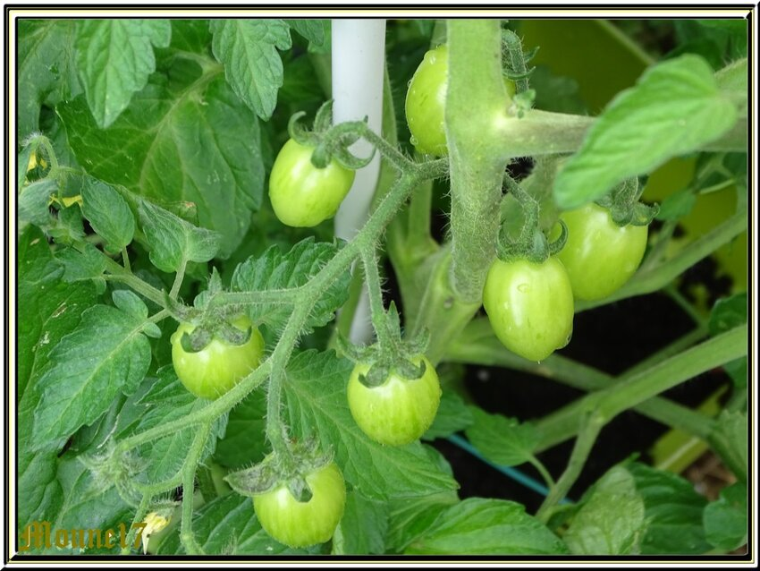 Les fruits du jardin en juin et en juillet