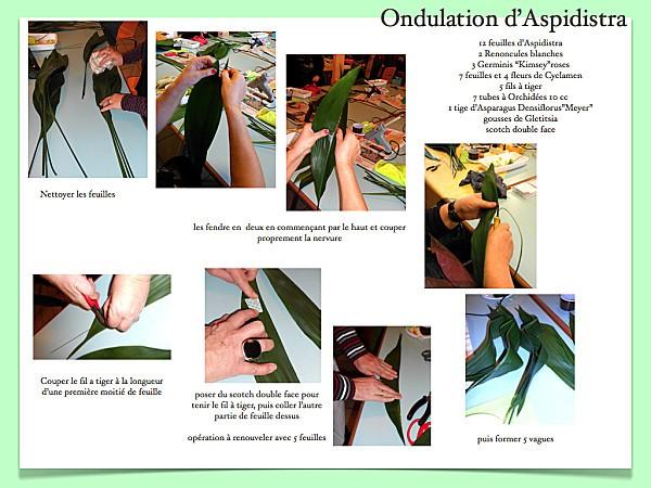 ondulationaspidistra.001.jpg