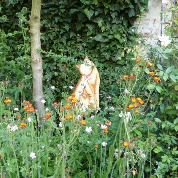 chat roux herbes folles - juin 2014 - plan 1 (800x800)