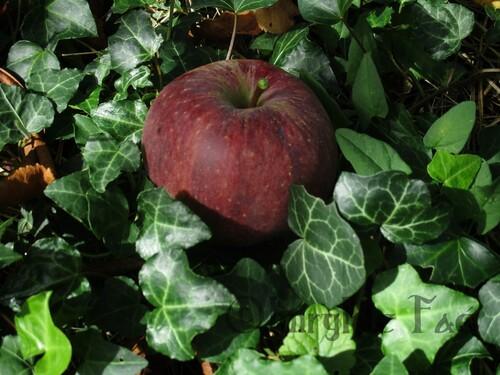 Pommes d'Imryl le Faé