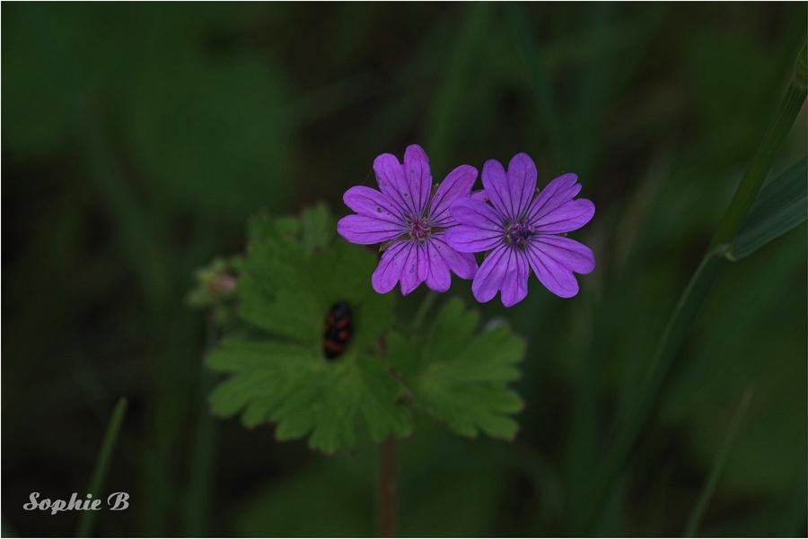 Flore de mai  .1 . Dans les bois .