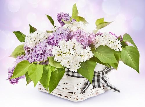 Bouquet de fleurs en vase 10