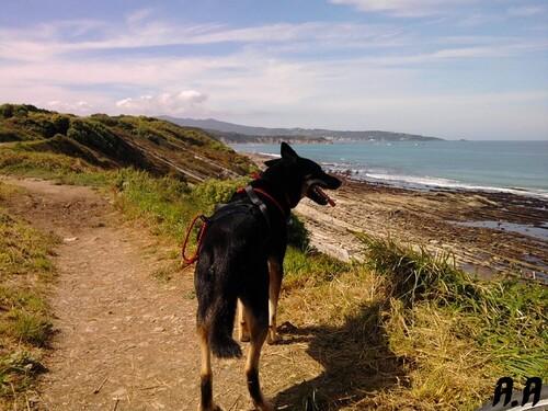 Les sentiers du littoral