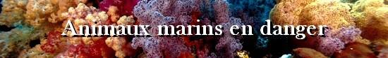 animaux-marins-en-danger