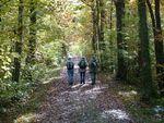 La randonnée du 11 novembre en forêt de Grimbosq
