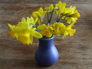 bouquet-bleu-jonquilles.jpg