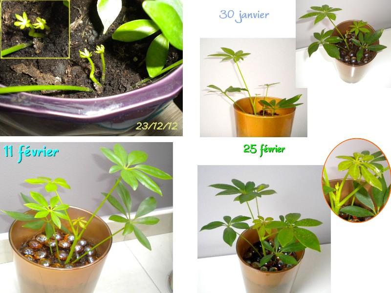 mes plantes et fleurs page 5 serre titude. Black Bedroom Furniture Sets. Home Design Ideas