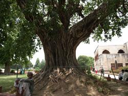 Vers les sources du Gange ! (déc 91). Delhi-Haridwar