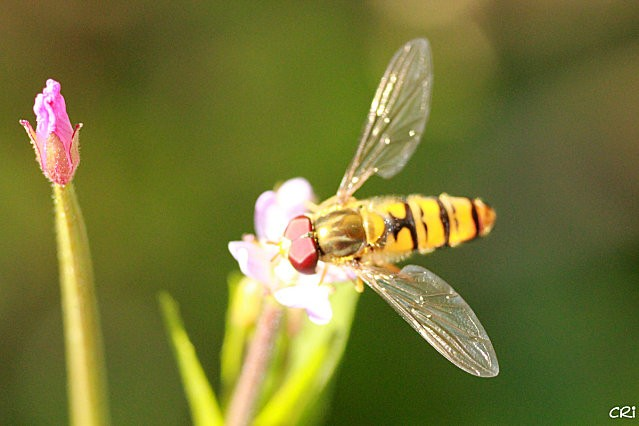 macros-insectes 2960