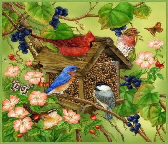 Oiseaux  (4)