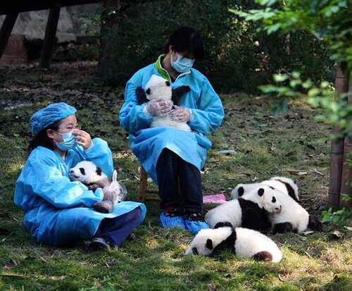 Patrimoine mondial de l'Unesco : Huanglong et Jiuzhaigou - Chine -