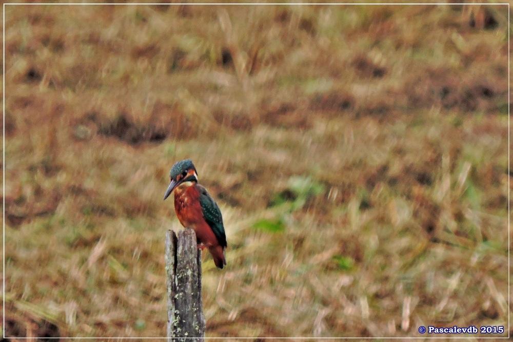 Réserve ornitho du Teich - Septembre 2015 - 1/6