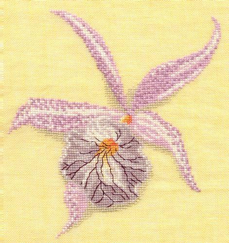 Orchid--e-Marie.jpg