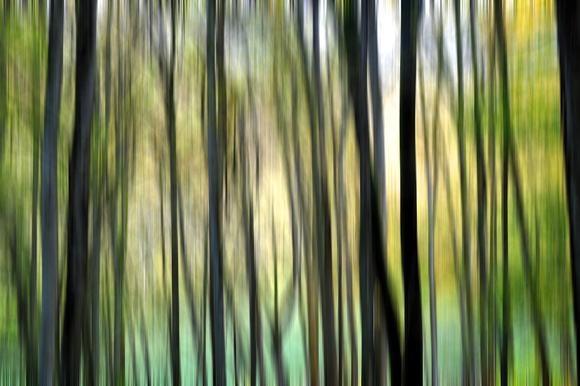 """""""Prom'nons nous dans les bois ..."""