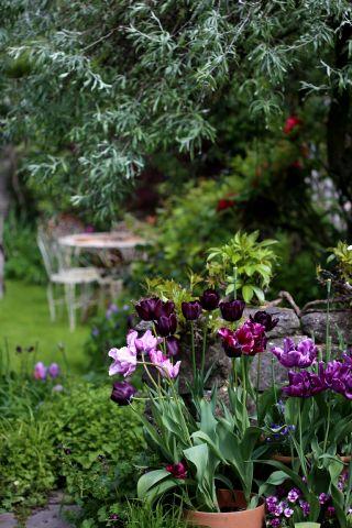 Le jardin comme exutoire (8)