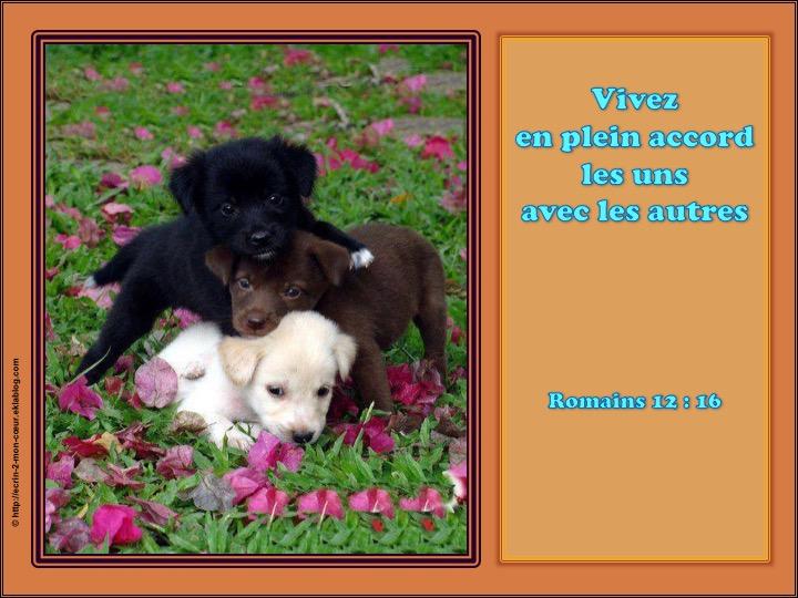 Vivez en plein accord les uns avec les autres - Romains 12 : 16