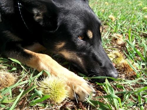 Cani-rando