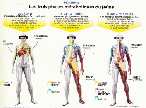 Le Jeûne thérapeutique détruit le cancer et régénère le corps – Prouvé scientifiquement !