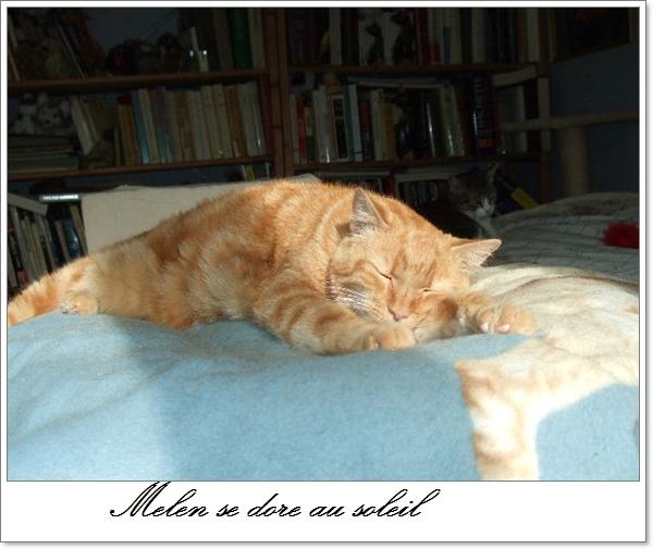 Melen se dore au soleil .....