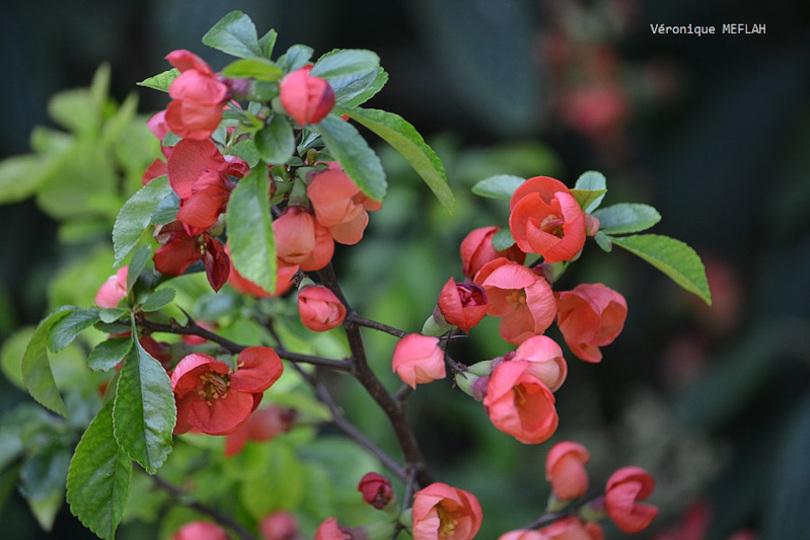 Rambouillet : Un lundi de Pâques bien fleuri !