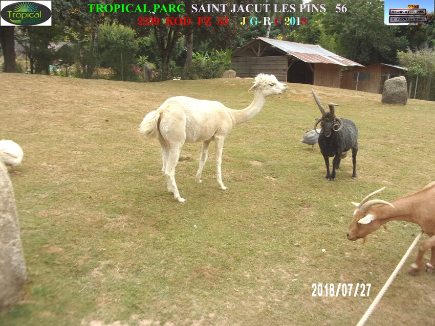 TROPICAL PARC:  animaux     D   07/11/2018