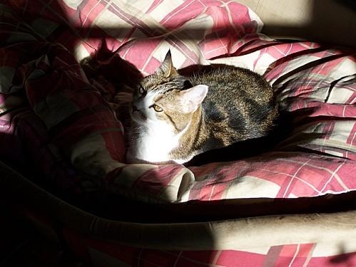 Mousse baignoire au soleil oct 2012 3