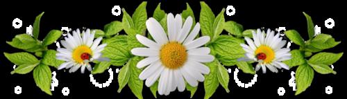 A.T.C. Thème : Fleur