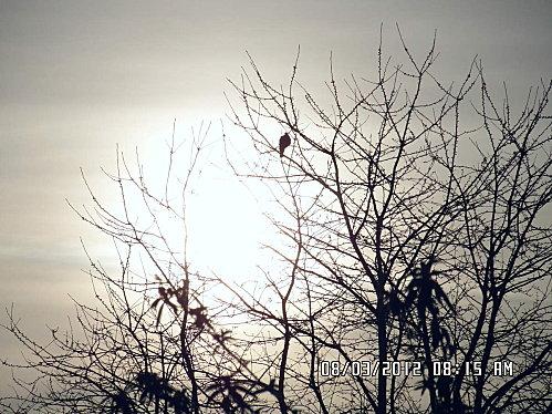 soleil-et-lune-014.JPG