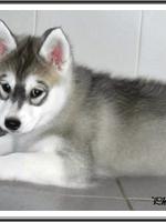 Jalya (2 mois)
