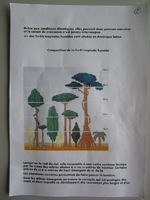 """Exposé""""La forêt tropicale"""""""