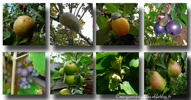 Fruits de fin d'été - Fruits of the summer end