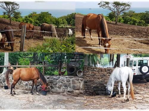Le ranch des 2 îlets