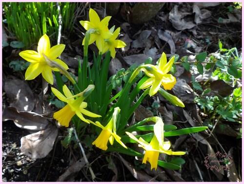 serais ce le printemps ???