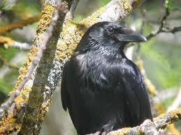 http://lancien.cowblog.fr/images/oiseaux/images2.jpg