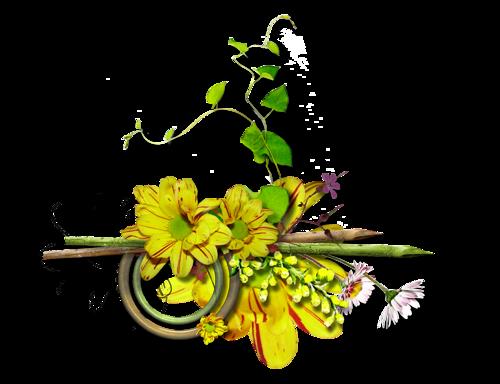 Vertus médicinales des plantes sauvages : Pervenche