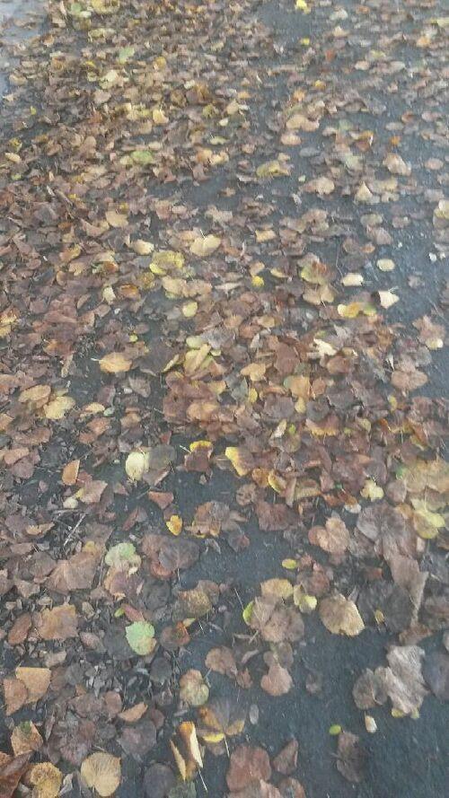 Défi 1 mois, une photo de Khanel - L'automne