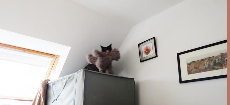 Dimanche c'est chat