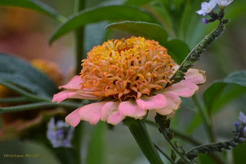 Les fleurs reviendront, poème de jules Delavigne (2010)