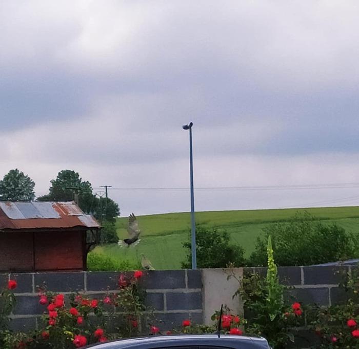 L'image contient peut-être: ciel, nuage, arbre, plante et plein air